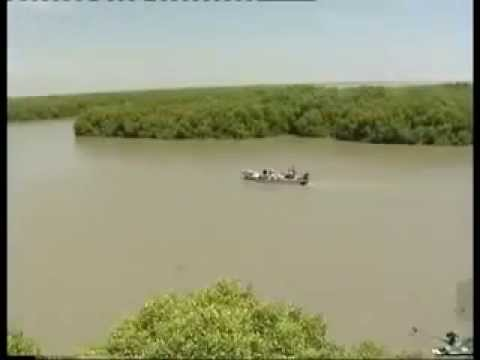 Muthupettai Mangrove Forest (Lagoon)