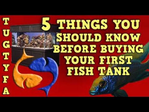 5 Things To Know Before Buying Your First Fish Tank The Ultimate Guide To Your First Aquarium Ep 1