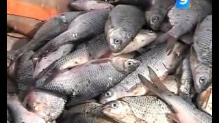 Что объединяет браконьеров и инспекторов Рыбнадзора
