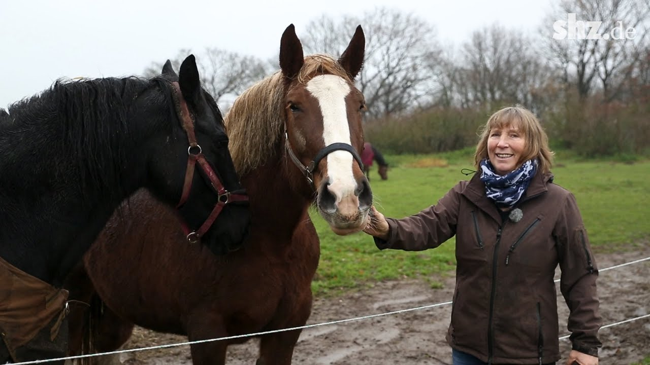 Pferdeklappe in Norderbrarup: Die Anlaufstelle für Pferde in Not