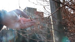 Cherry Orchard Community Garden - Video Diary 2