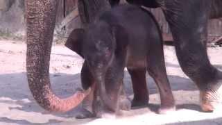 Трогательные отношения между слоненком и его матерью
