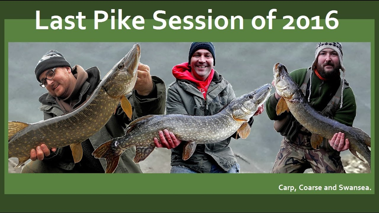Last Pike Fishing Session of 2016. Carp, Coarse and Swansea Video 146