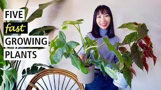 5 Fast Growing Indoor Plants | Perfect to Start from A Cutting