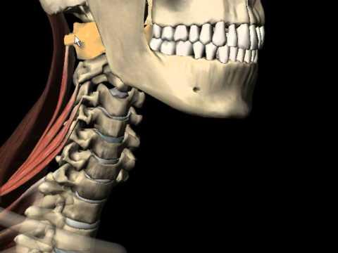 Omez și dureri articulare