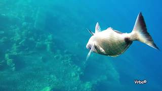 Spearfishing in Croatia mix vol 1
