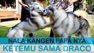 Video NALA ketemu DRACO ( Papa nya ) - VLOG MP3, 3GP, MP4, WEBM, AVI, FLV September 2019