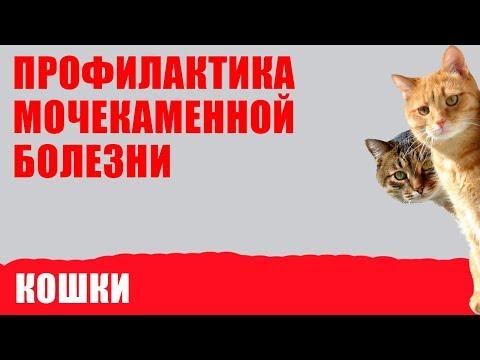 Профилактика мочекаменной болезни у кошек. Советы ветеринара Royal Canin