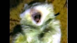 Истерика кота (Скример)