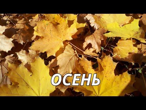 Золотая осень.Красивые видео и фото про осень.