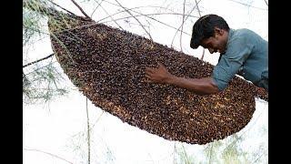 Village Boys Harvesting Biggest Honeycomb in my village | village food taste