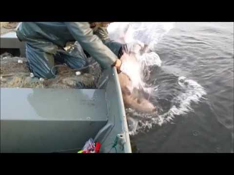Saratov che pesca oggi
