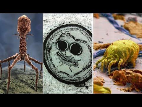 Фантастические снимки, сделанные электронным микроскопом | часть 3