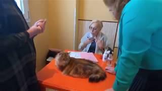 Выставка Кошек Санкт-Петербург. Клуб ФелиСити