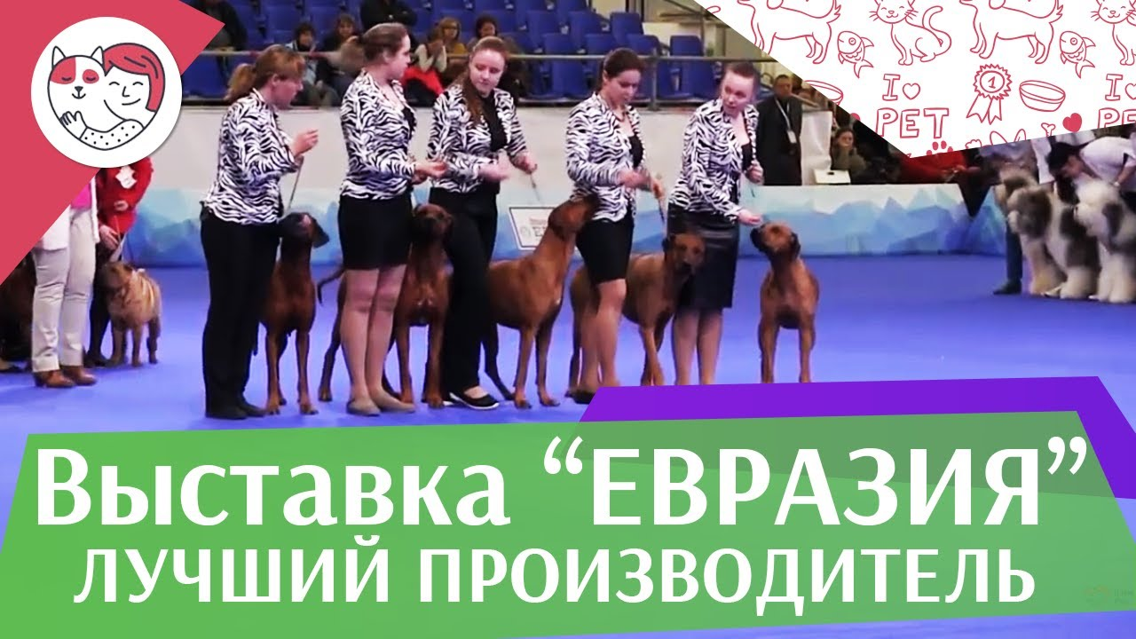 Best in show Лучший производитель 19 03 17 на Евразии ilikepet