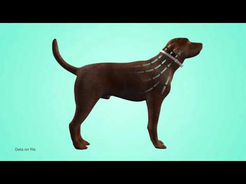 Seresto Flea & Tick Collar for Large Dogs (6-Pack) Video