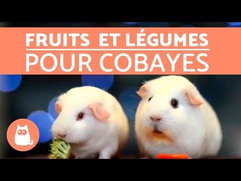 Fruits et légumes parfaits pour cobayes
