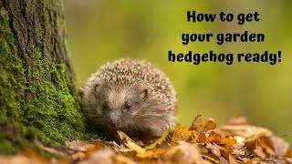 Get your garden hedgehog-ready!