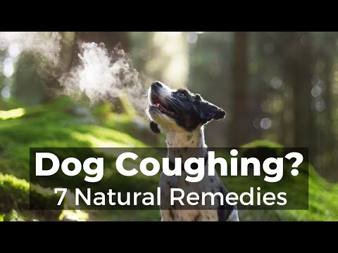 Video Dog Coughing: How To Quickly Stop It With 7 Natural Remedies