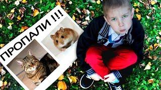 Куда ПРОПАЛИ КОТЕНОК И ХОМЯК Ромы Видео для Детей Рома и Хелпик
