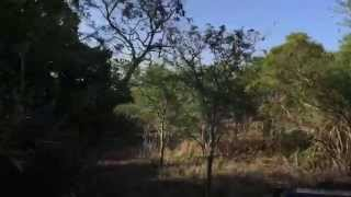 preview picture of video 'South Africa Day 10 - Mavela safari in Zululand day 2'