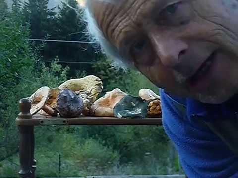 Trattamento di un fungo di rimedi di gente di orecchi