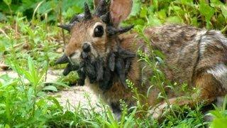 Смотреть онлайн Вторжение бешеного кролика мутанта на Землю
