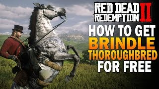 How To Get RARE Brindle Thoroughbred FREE! Fastest Horse! Red Dead Redemption 2 Best Horses [RDR2]
