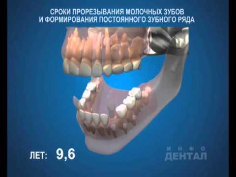 Терміни прорізування молочних зубів і формування постійного зубного ряду