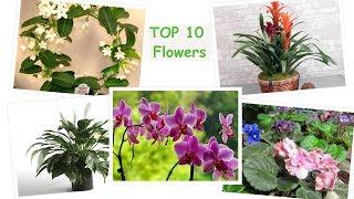 Top 10 flowers to grow indoors