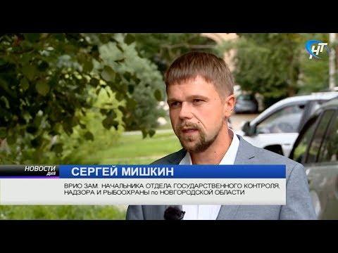 Рыбак из Старой Руссы поймал гигантского осетра, и теперь его проверяют сотрудники Рыбоохраны