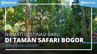 Serunya Jelajah Destinasi Baru di Taman Safari Bogor, Safari Greens Food Carnival Cocok untuk Santai