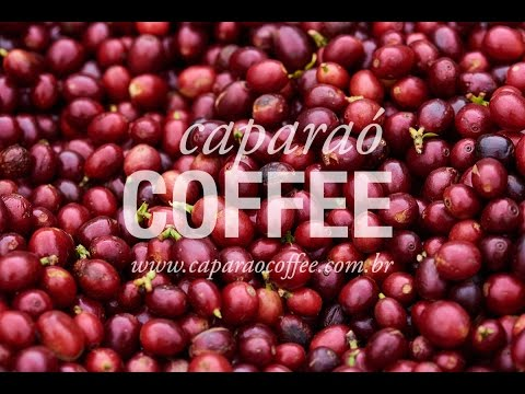 Coffee of the Year 2016