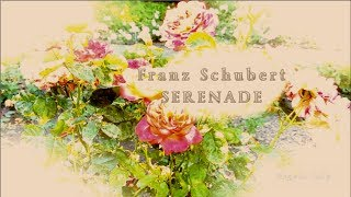 Schubert  Serenade  A thousand roses for you