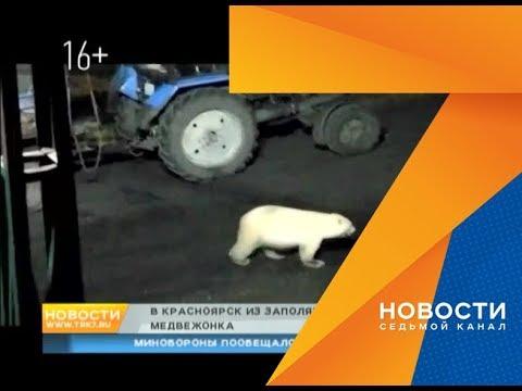 В зоопарке спасли и доставили в Красноярск разлученного с мамой белого медвежонка