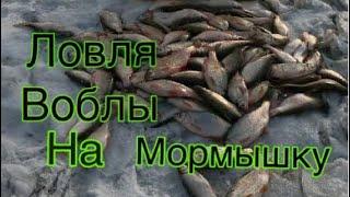 Рыбалка на моздокском водохранилище