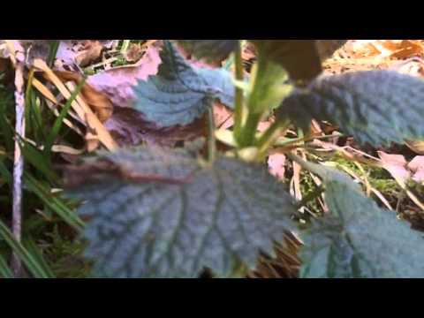 Video nettles and the uses