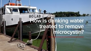 HABs FAQs: How is drinking water treated to remove microcystin?