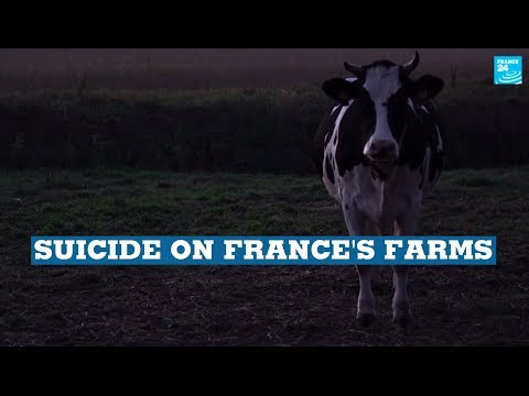 Suicide on France's Farms