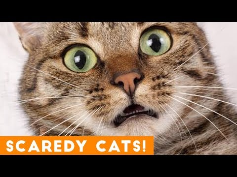 Hilarious: When Cats Get a Fright!
