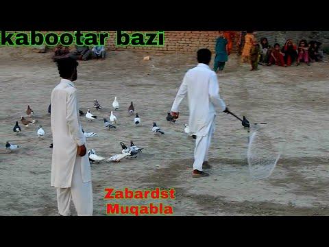 Kabootar Bazi My New Gole Kabootar Video 19