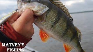 Ловля окуня на рыбинском водохранилище