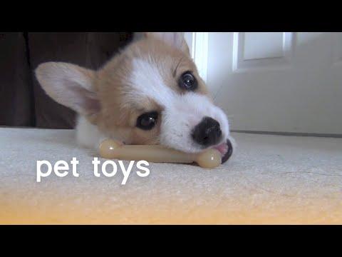 סרטון מקסים של חיות מחמד משחקות בצעצועים שונים