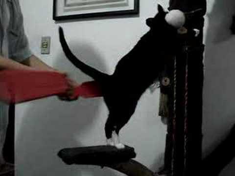 Paddle Cat