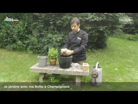Je jardine avec ma Boîte à Champignons