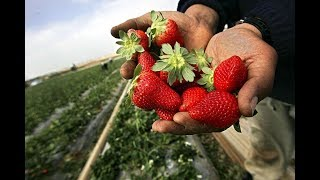 Fruits and veggies you won't believe are man made | Facts about Fruits and Vegetables