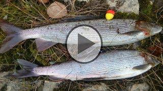 Рыбалка на хариуса в сибири осенью