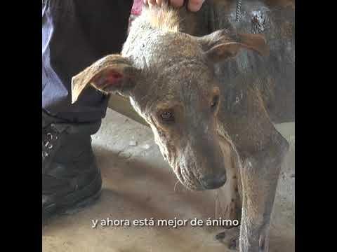 El rescate de Toto abandonado y sarnoso