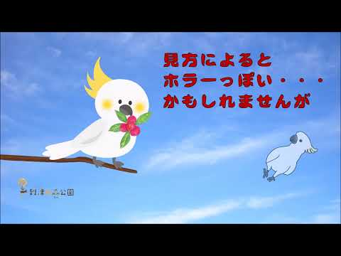 キバタン・キックのヤマモモ・モグモグタイム★到津の森公園