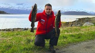 Без Денег в Норвегии. Поменяли Треску на Мясо Кита